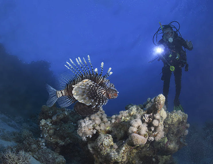Photograpers Name: Nathan JowettName of the photograph: Lionfish 2